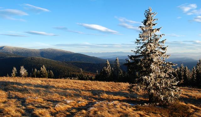 hory, stromy