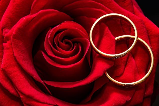červená růže, snubní prsteny