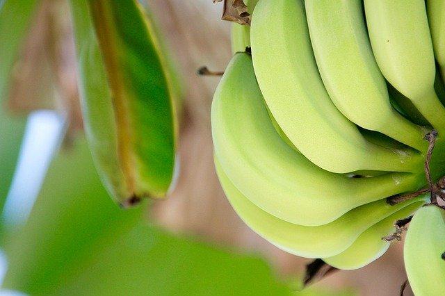 rostoucí banány