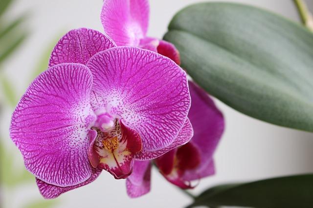 květ orchideje